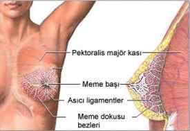 doğal göğüs büyütme